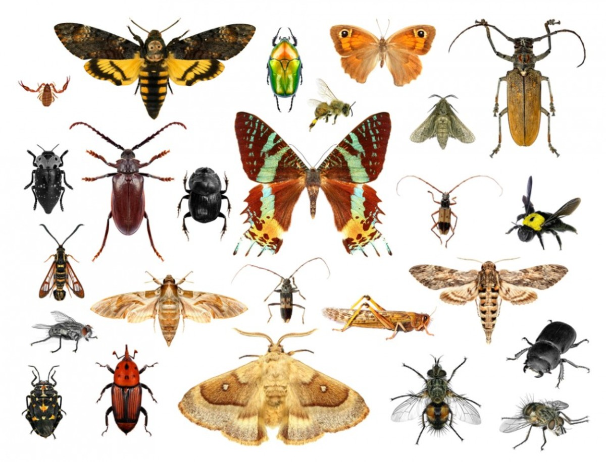 Common insects in your garden