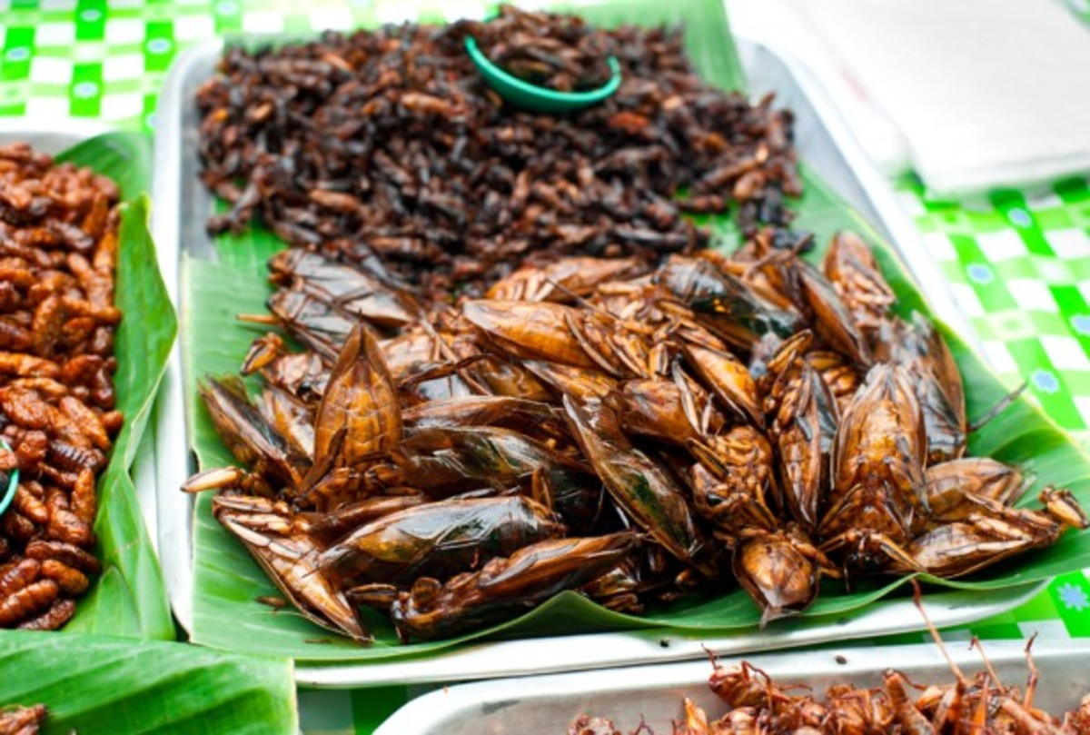 Edible insects ?