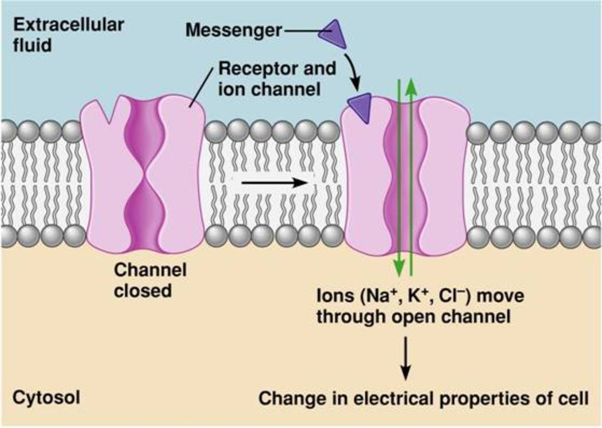 Ion channel coupled receptors