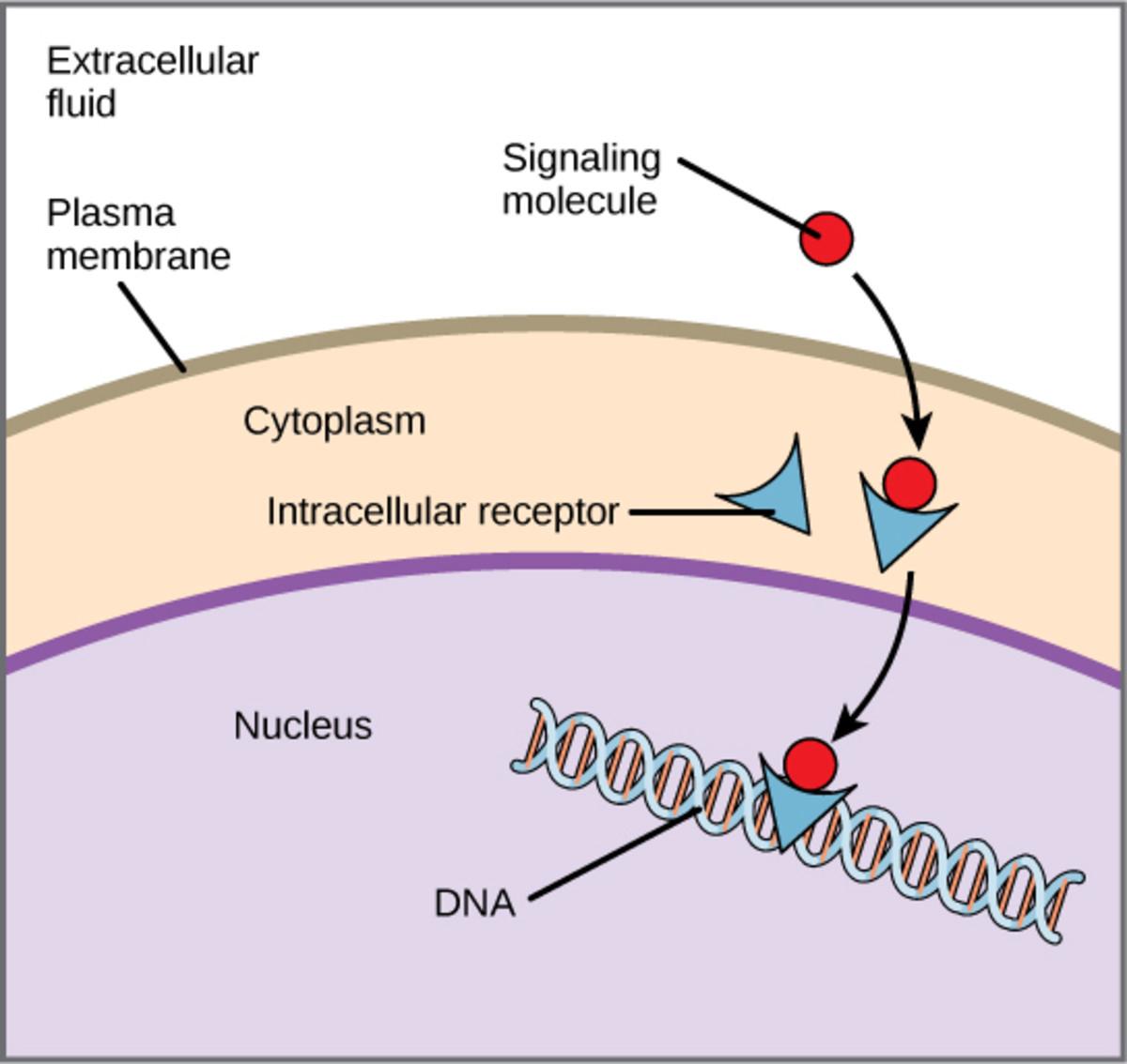 DNA-linked receptors