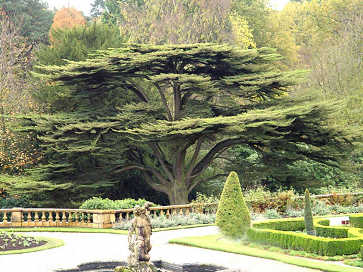 An Amazing and Beautiful Tree