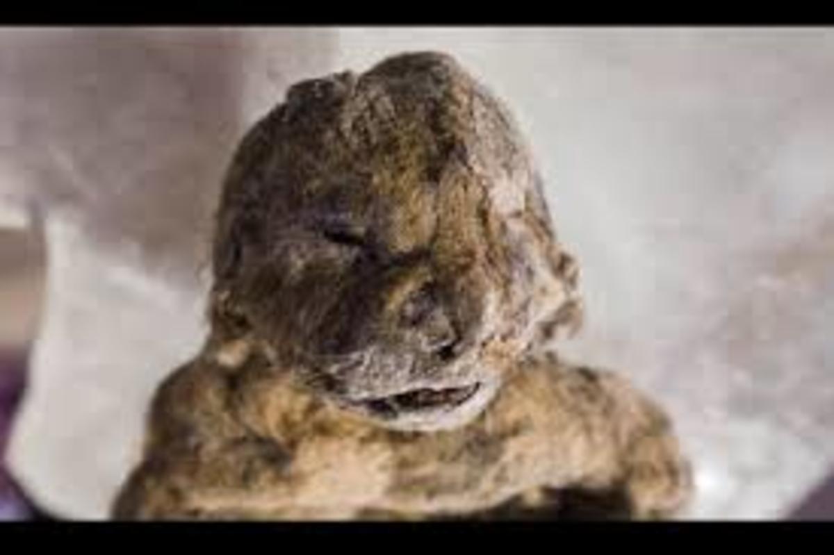 the-cave-lion