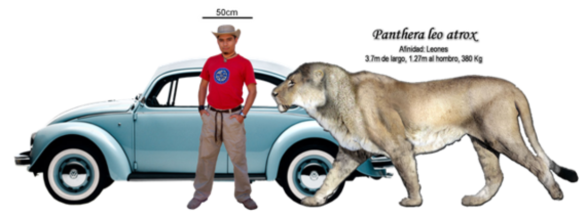 The Cave Lions | hubpages