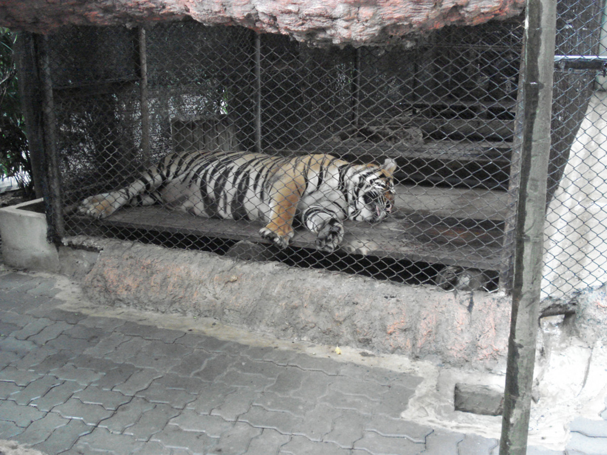 good_zoos