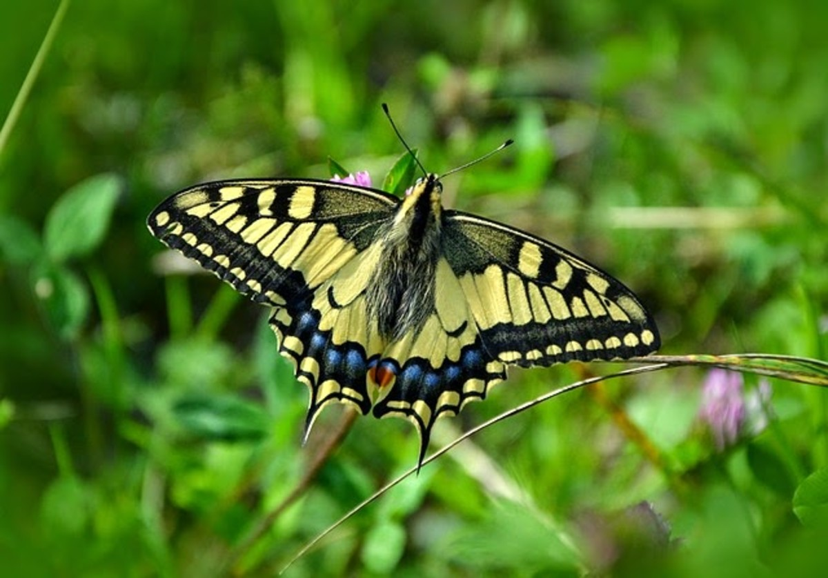 Do Butterflies & Caterpillars Prove Reincarnation?