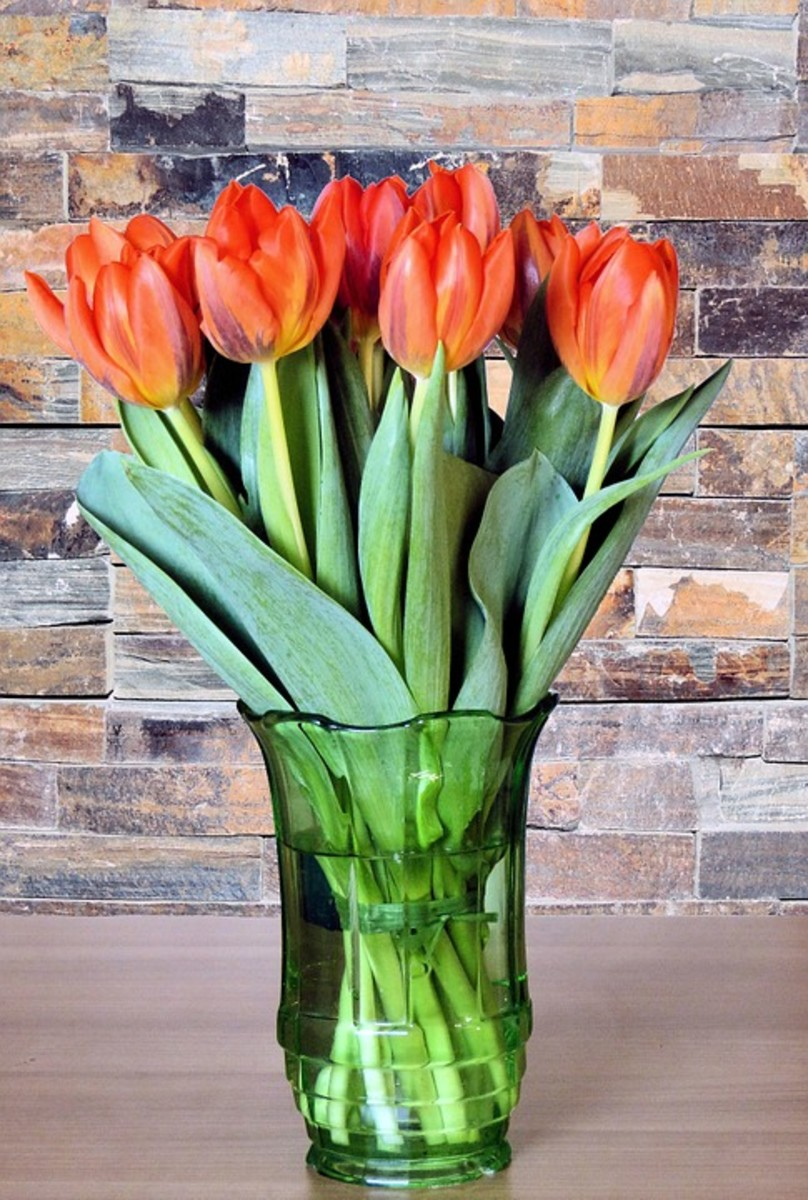 Tulips will make your home beautiful