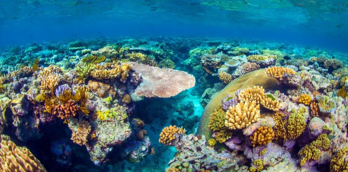 The colourful and unimaginable marine metropolis that exists underwater