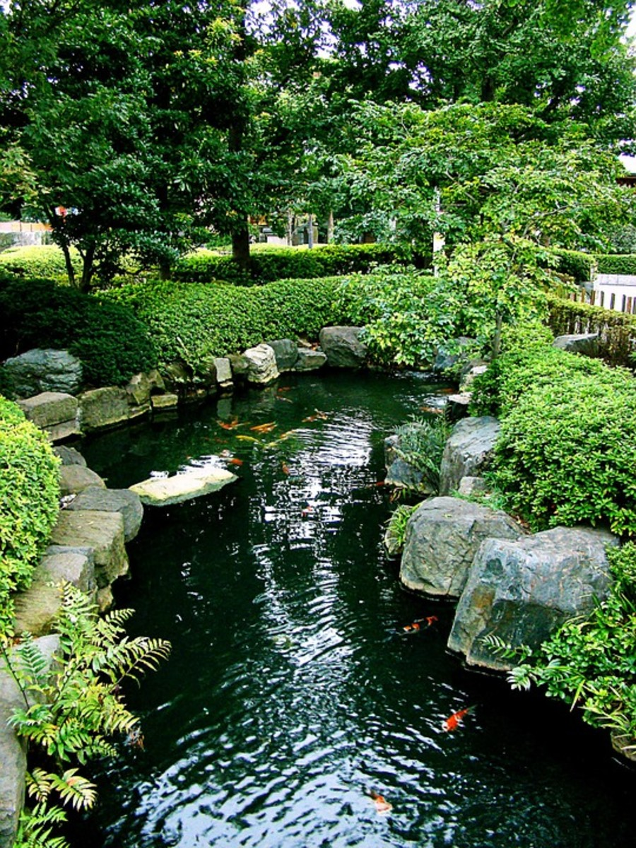 A koi pond in the backyard