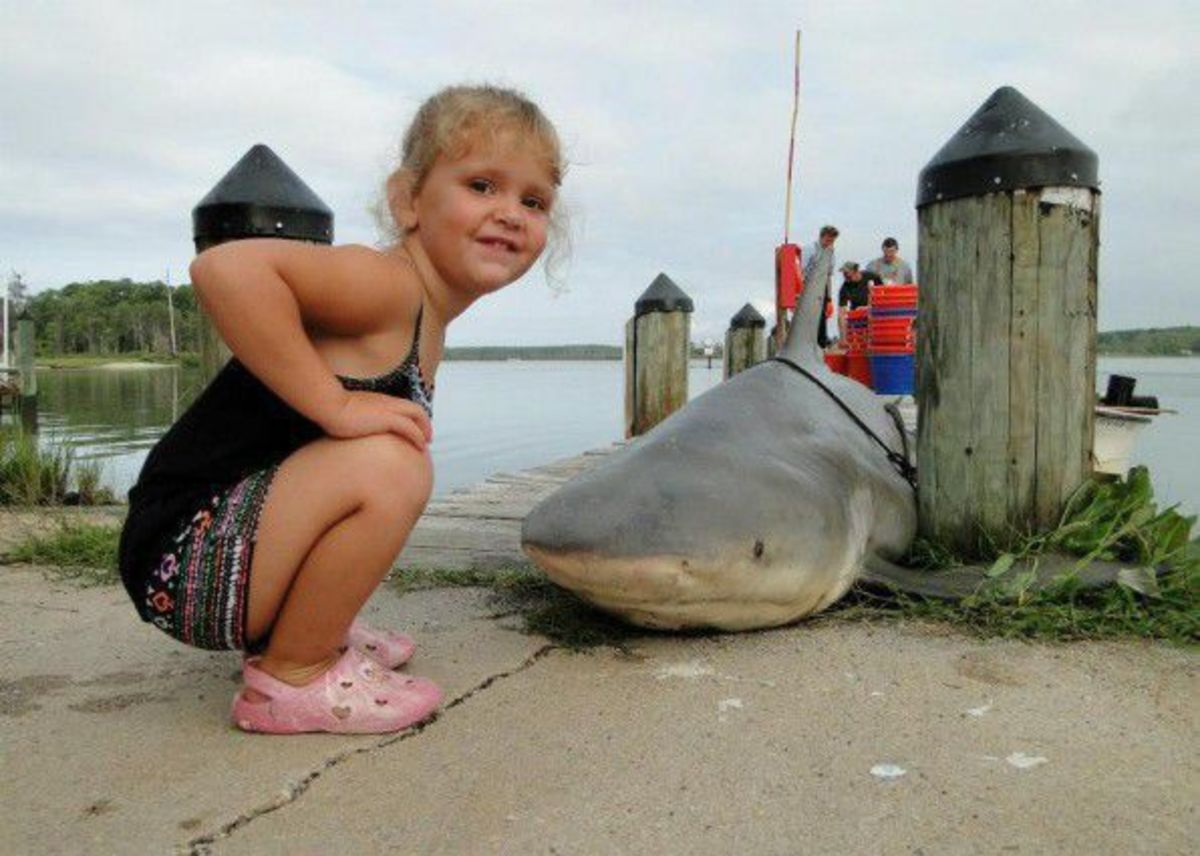 A bull shark caught near the mouth of the Potomac River in Maryland in 2013. It was falsely reported as shark caught in Lewisville lake in  in north Texas on June, 2017.