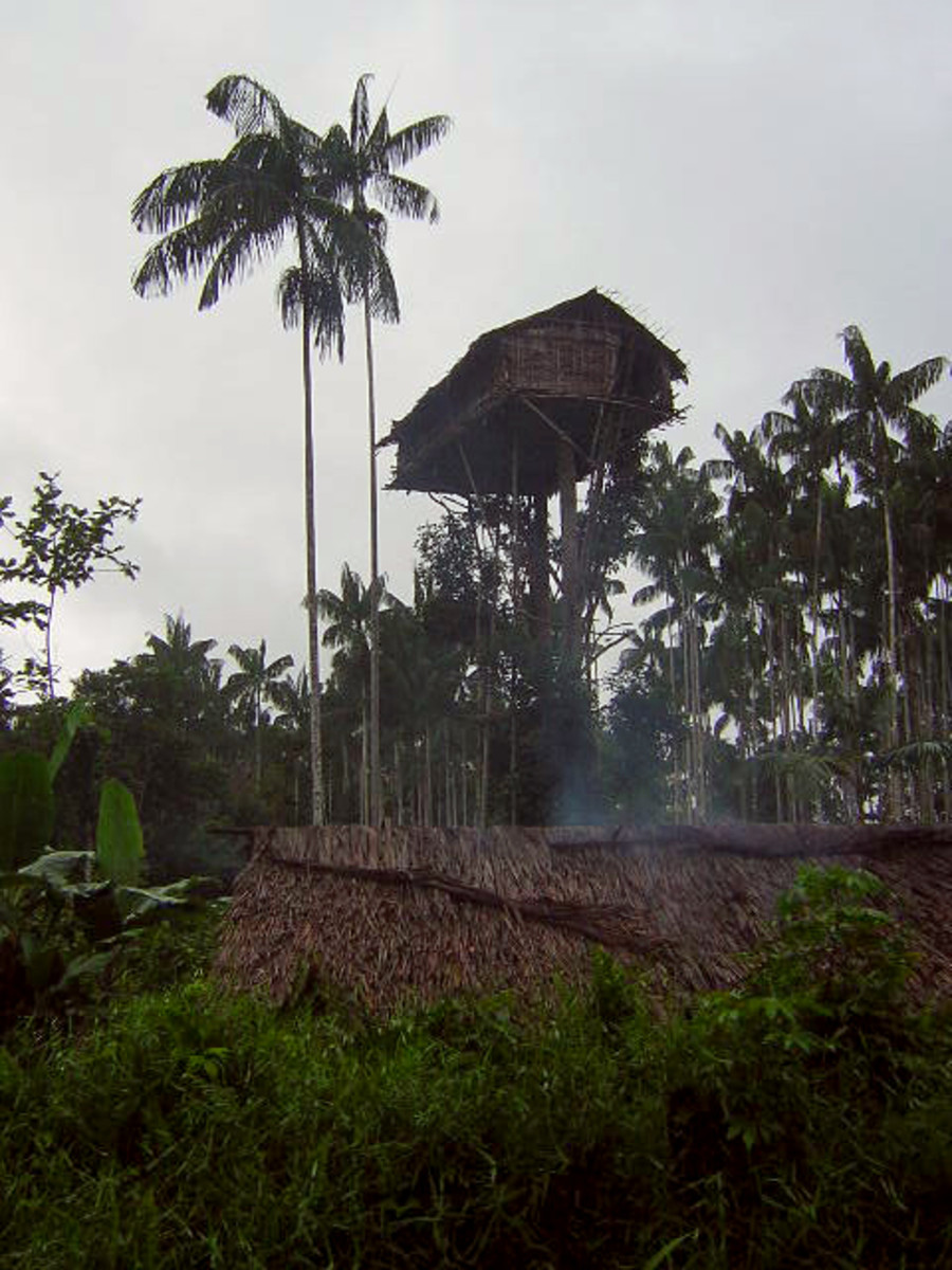 Tribe That Still Lives in Treehouses