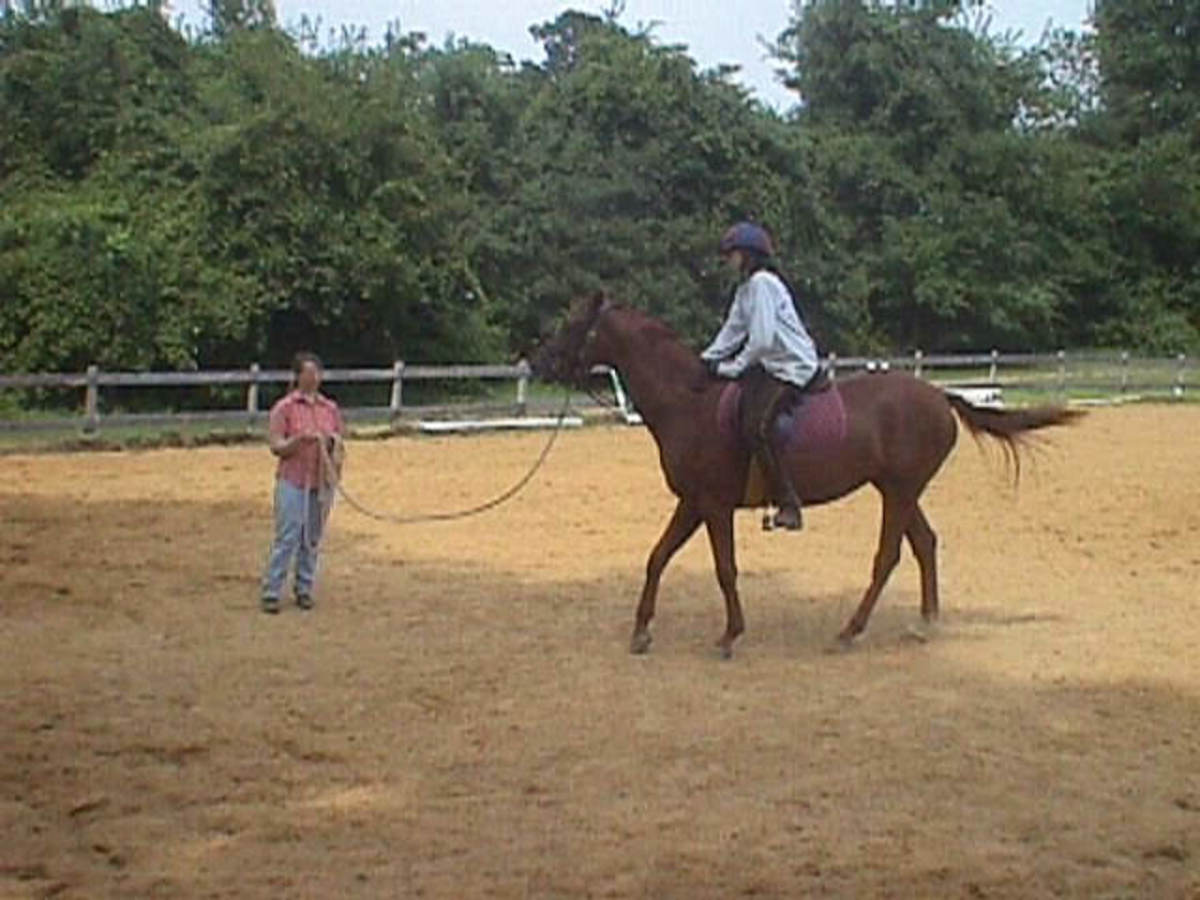 One of my very first rides on Zelda, you can see that she didn't look too enthused. I worked with a great trainer at the time.
