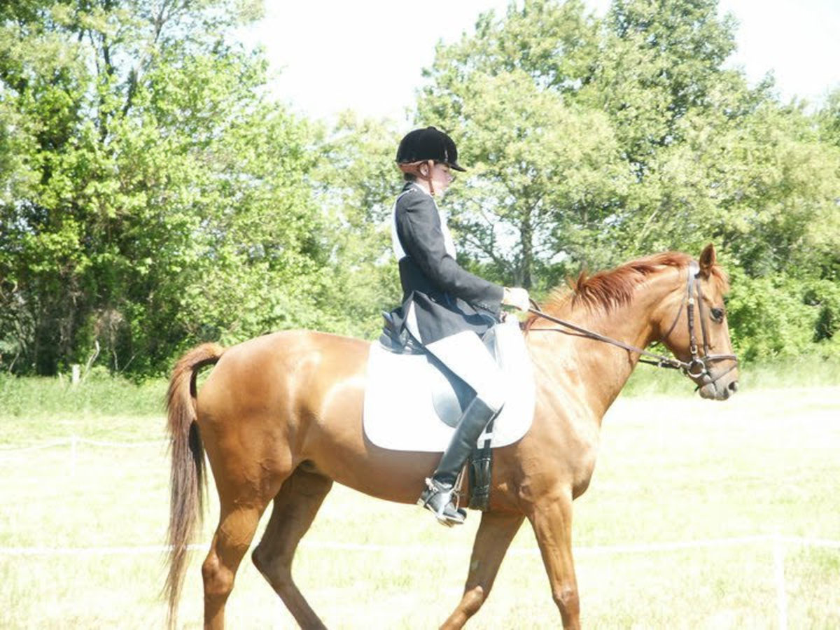 My heart horse, who was the most difficult horse I ever dealt with.