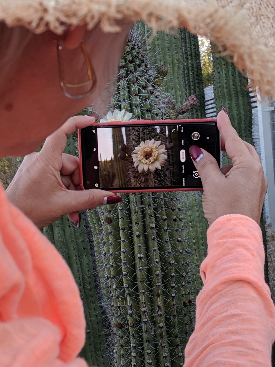 This Bloom was about 7 feet above the ground on the Cactus' Stem forcing us to stand on a ledge above the ground - I stood behind my wife & took this picture over her shoulder.