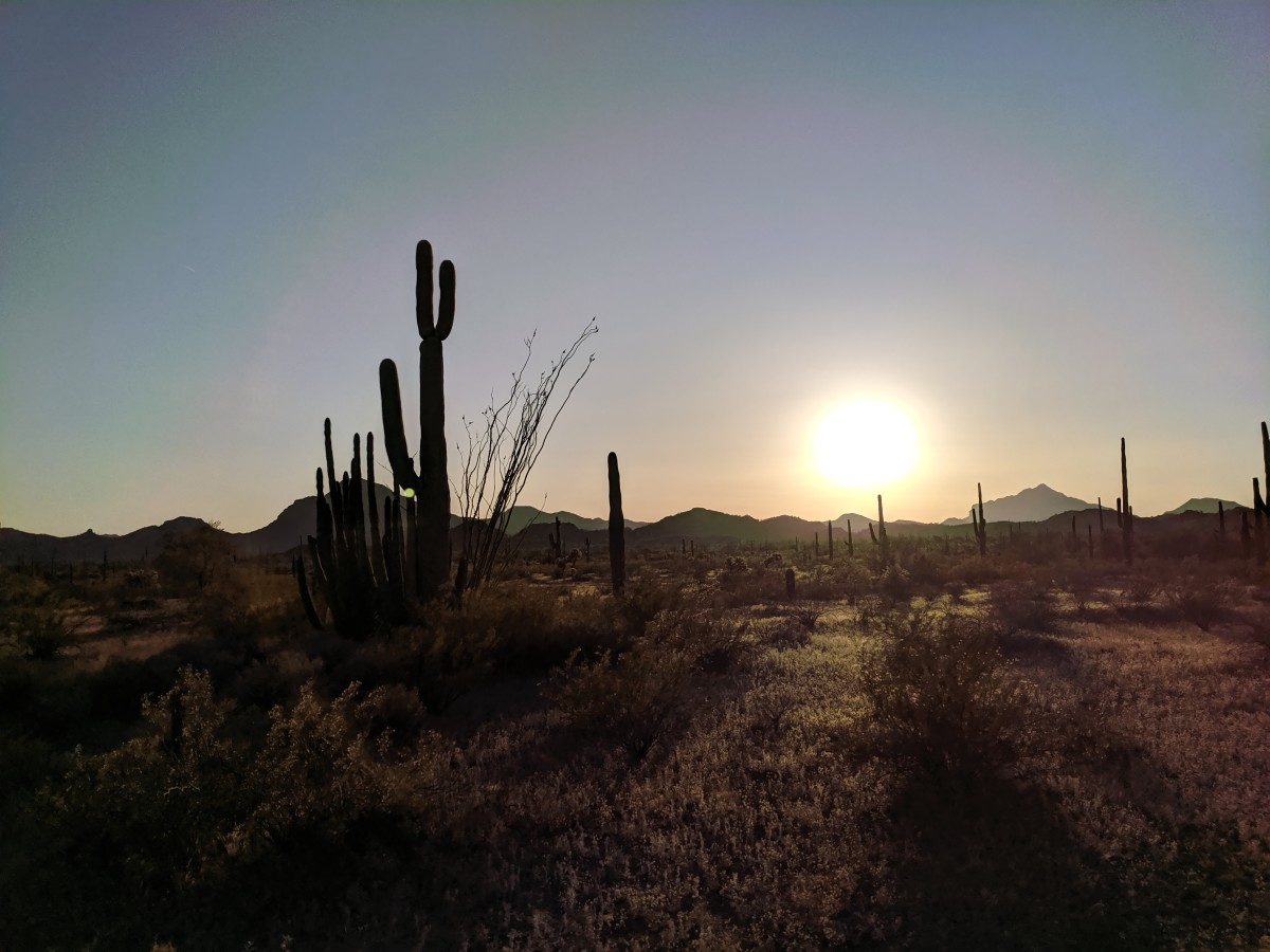 Sun setting behind distant mountains at Organ Pipe Cactus National Monument.  Note Organ Pipe Cactus growing next to a taller Saguaro Cactus on left side of picture - see photo below for closer look at the Organ Pipe Cactus growing next to the Saguar
