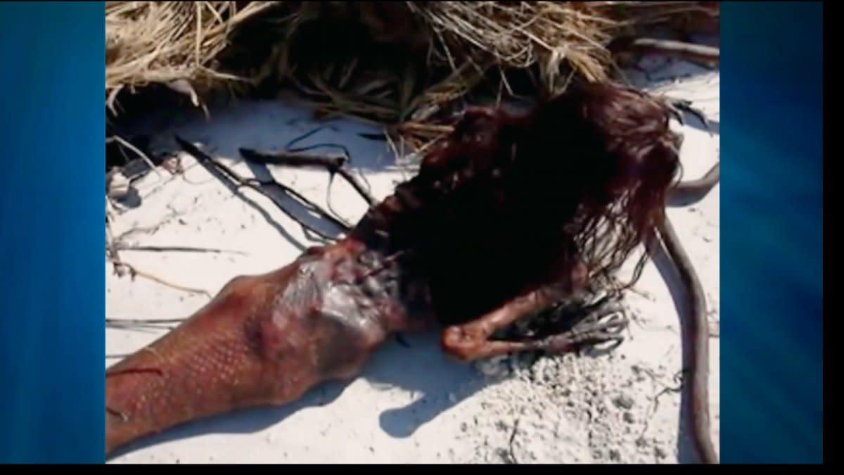 Mermaid taxidermy sculpture.