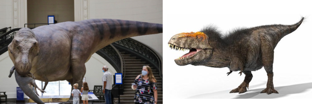 If T-Rex was Really Feathered or Not