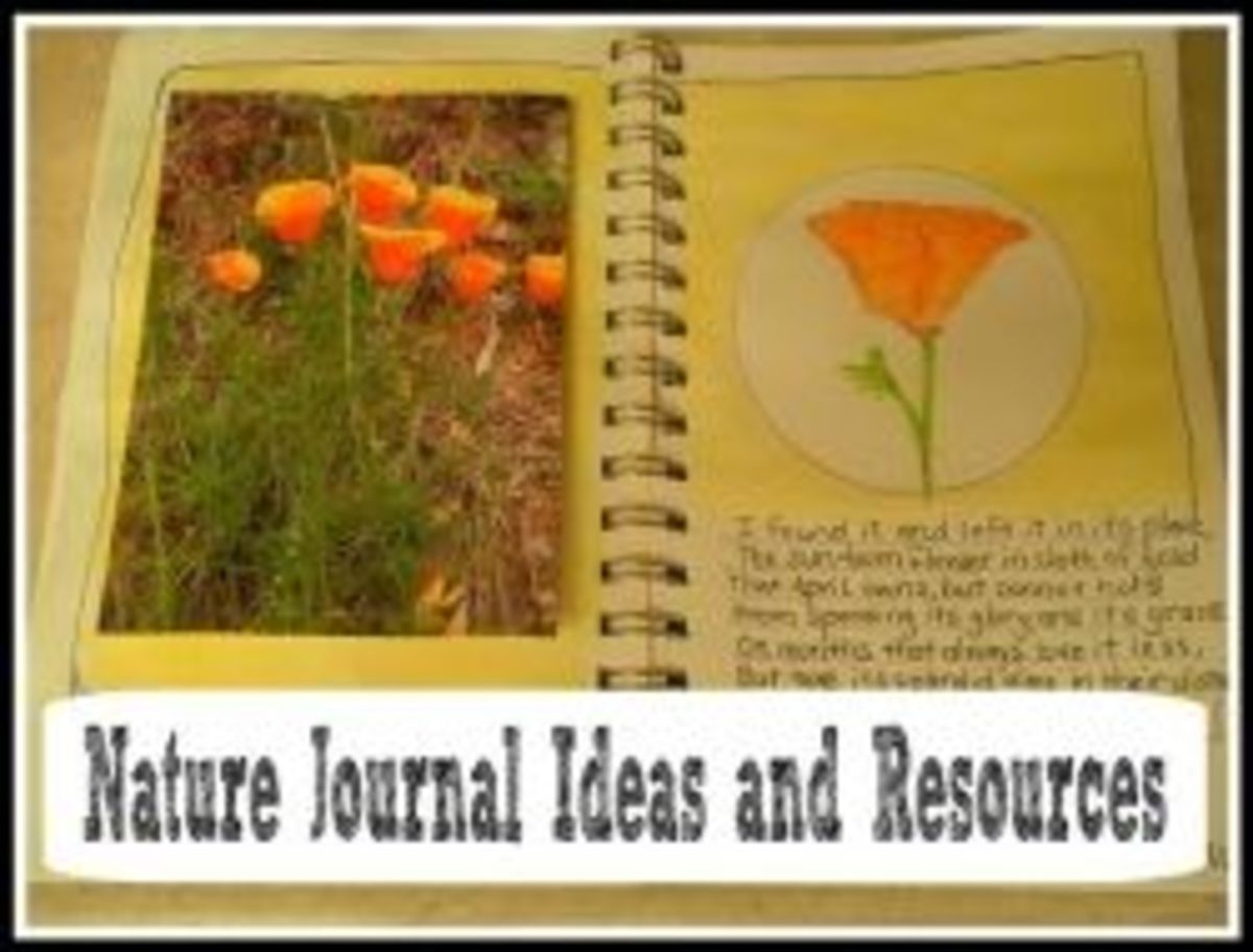 Nature Journals - Ideas and Tips