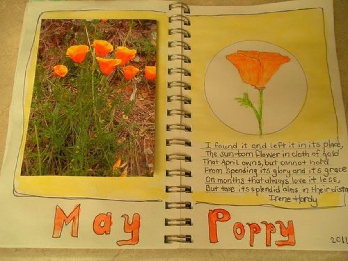 California Poppy nature journal