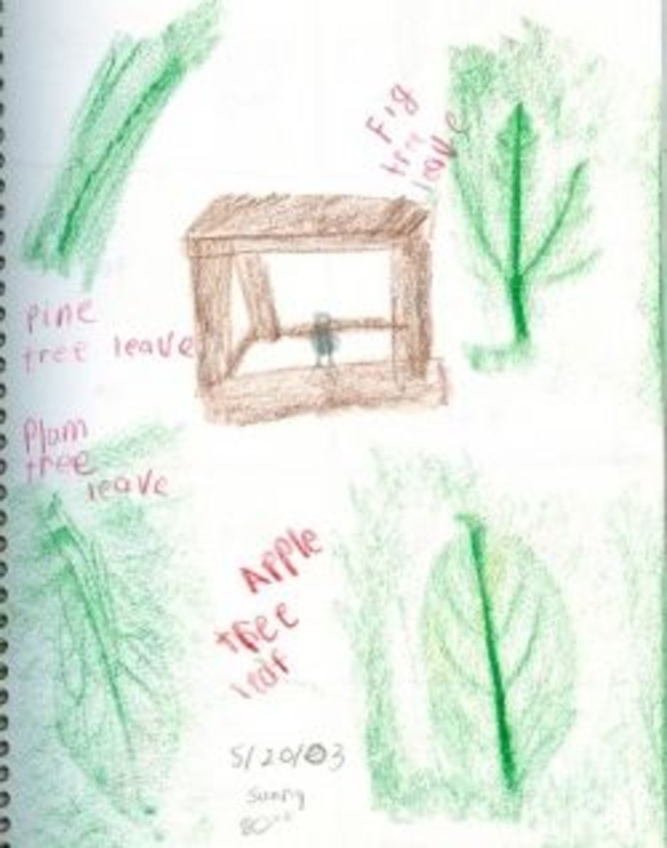 Nature Journal with rubbings