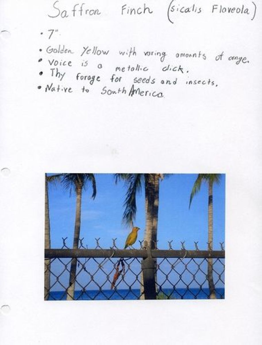 Include A Photo for a Quick Journal Entry