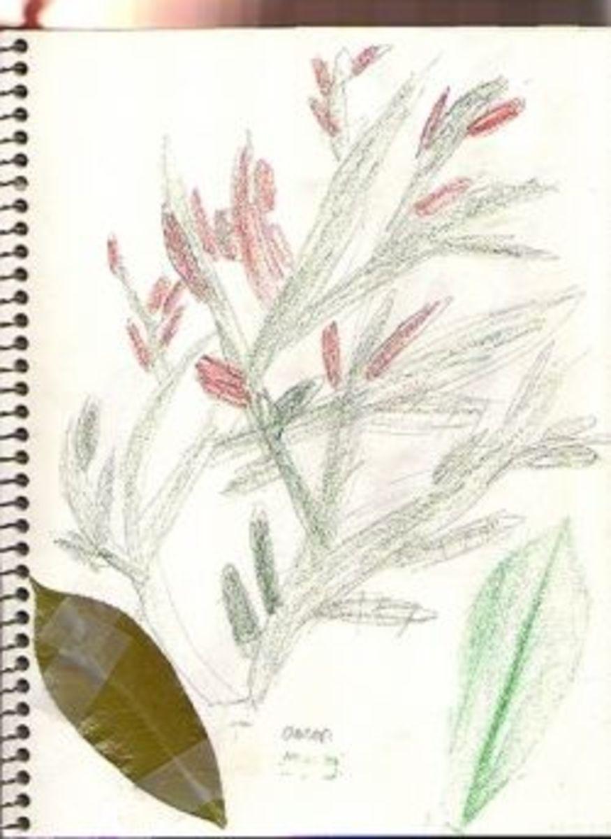 naturejournal