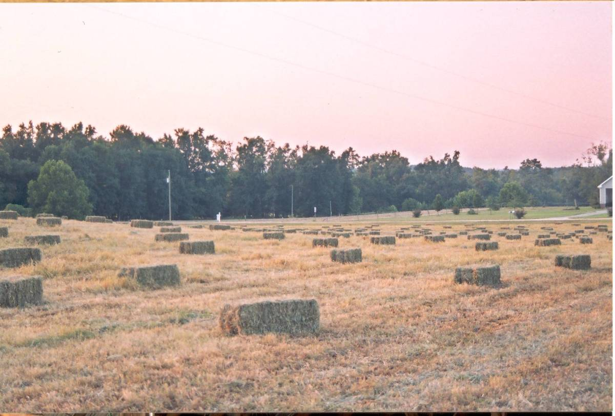 Square bales in the field ready for pickup