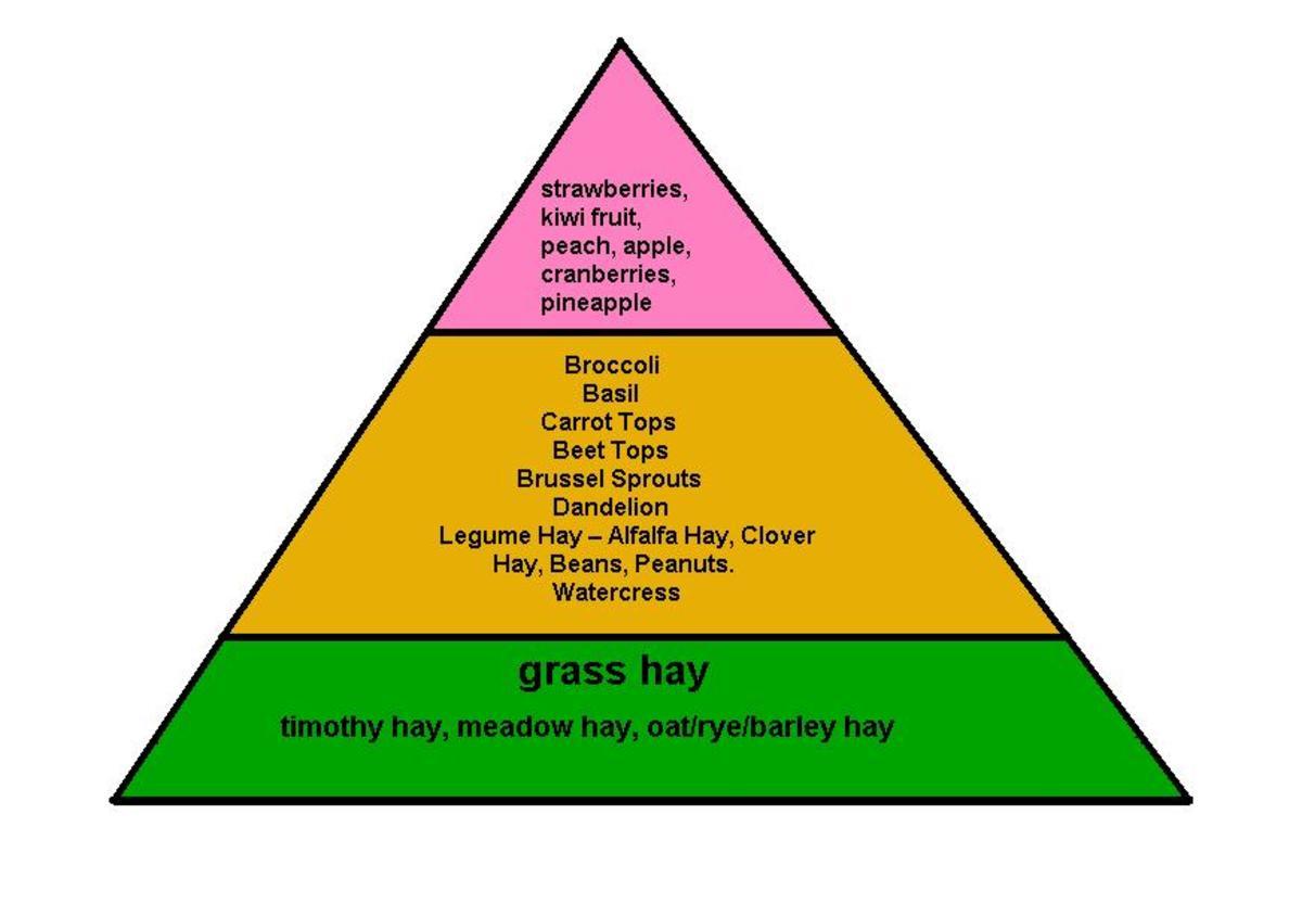 Bunny Food Pyramid: Healthy Rabbit Food