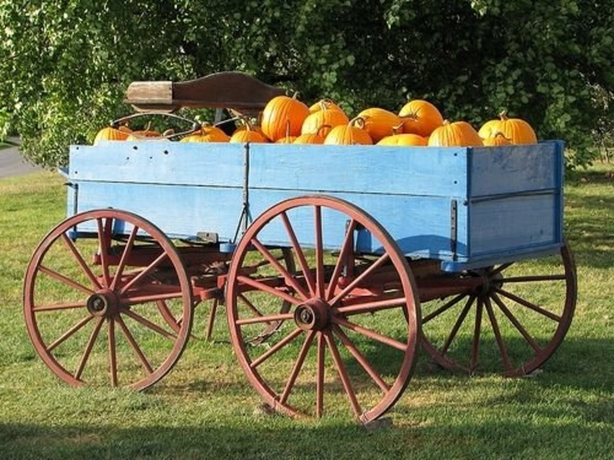 Pumpkins in the Blue Wagon