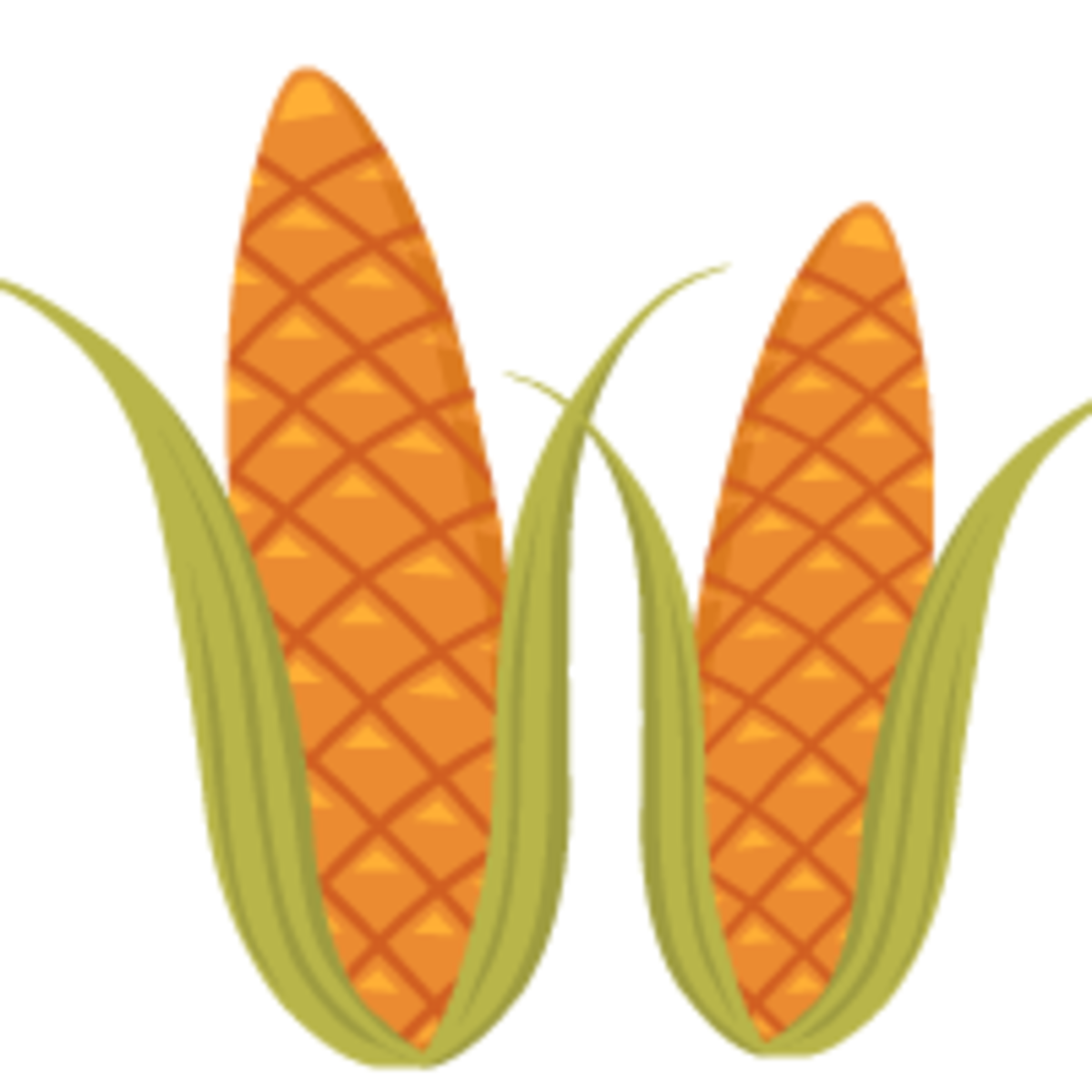two corn ears clip art
