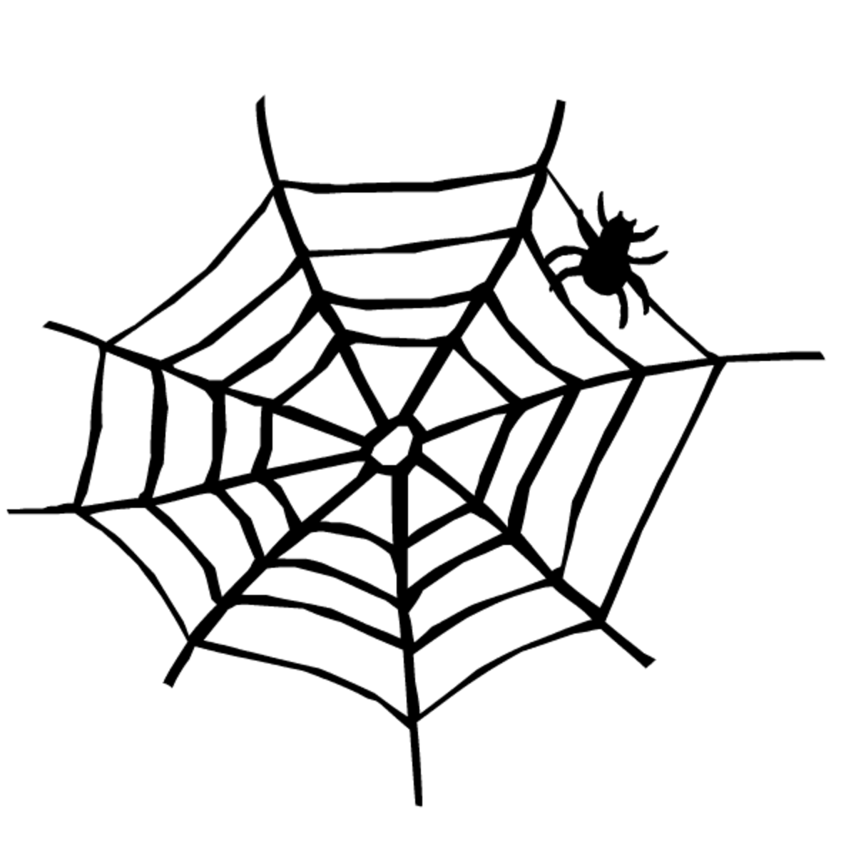 Black and white spider web and spider