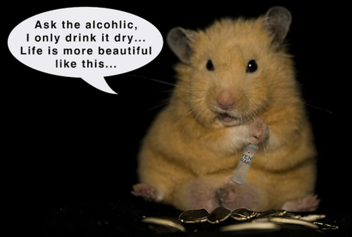 How NOT to euthanize a hamster | HubPages