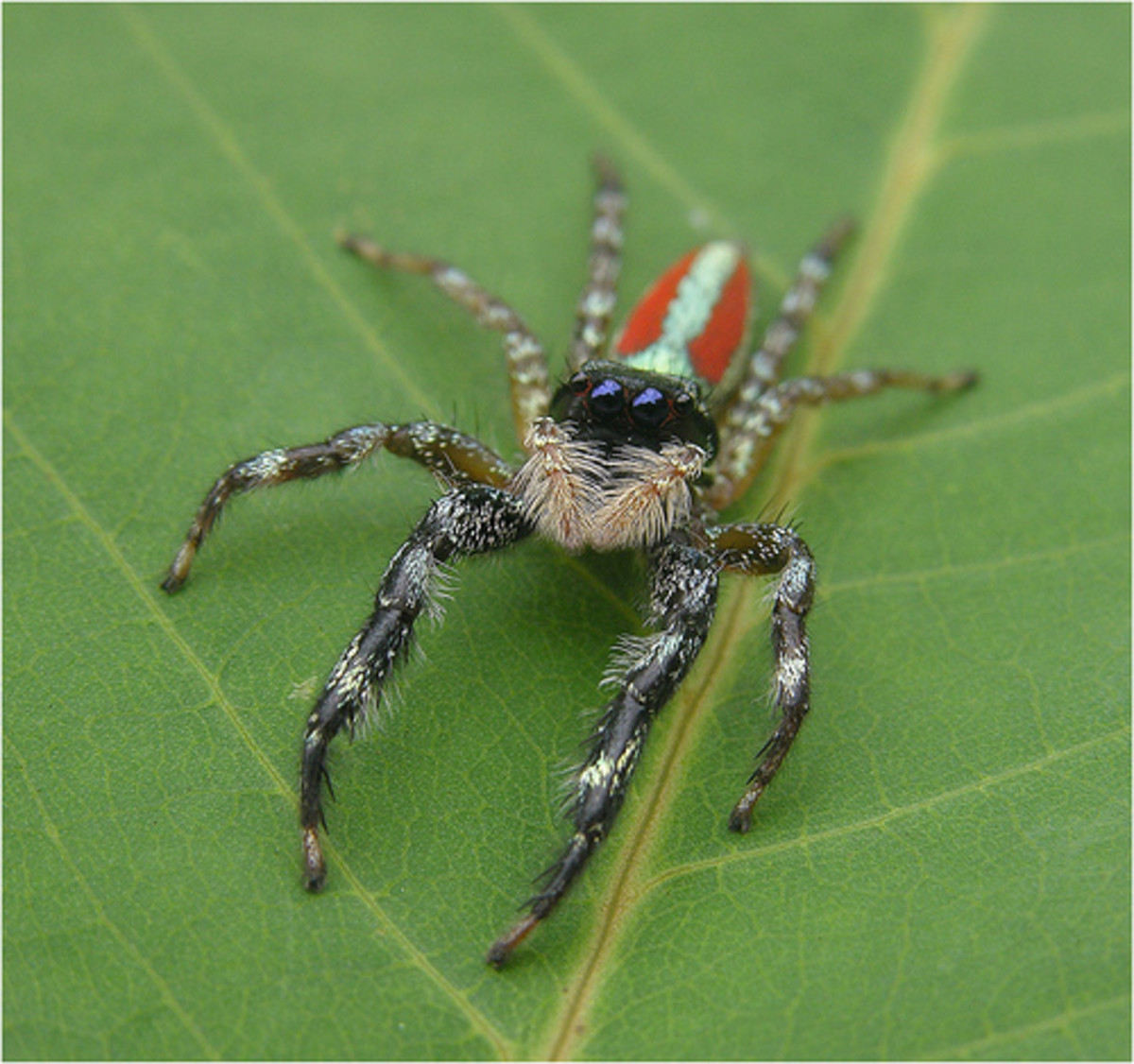 Some Important Species of Insects in Amazon Rainforest ... - photo#10