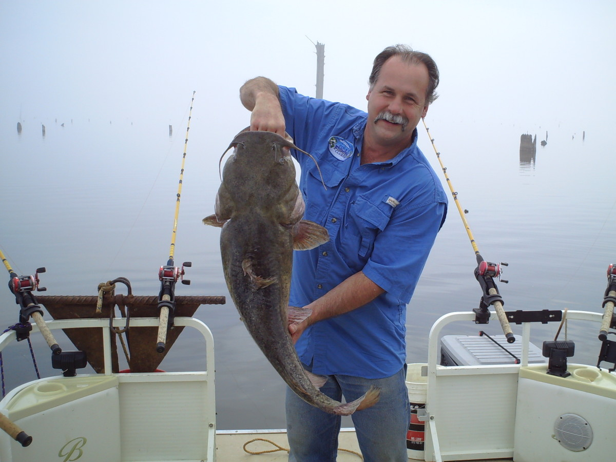 Another Nice Flathead Catfish! Gary Turner fishing on Santee Cooper!