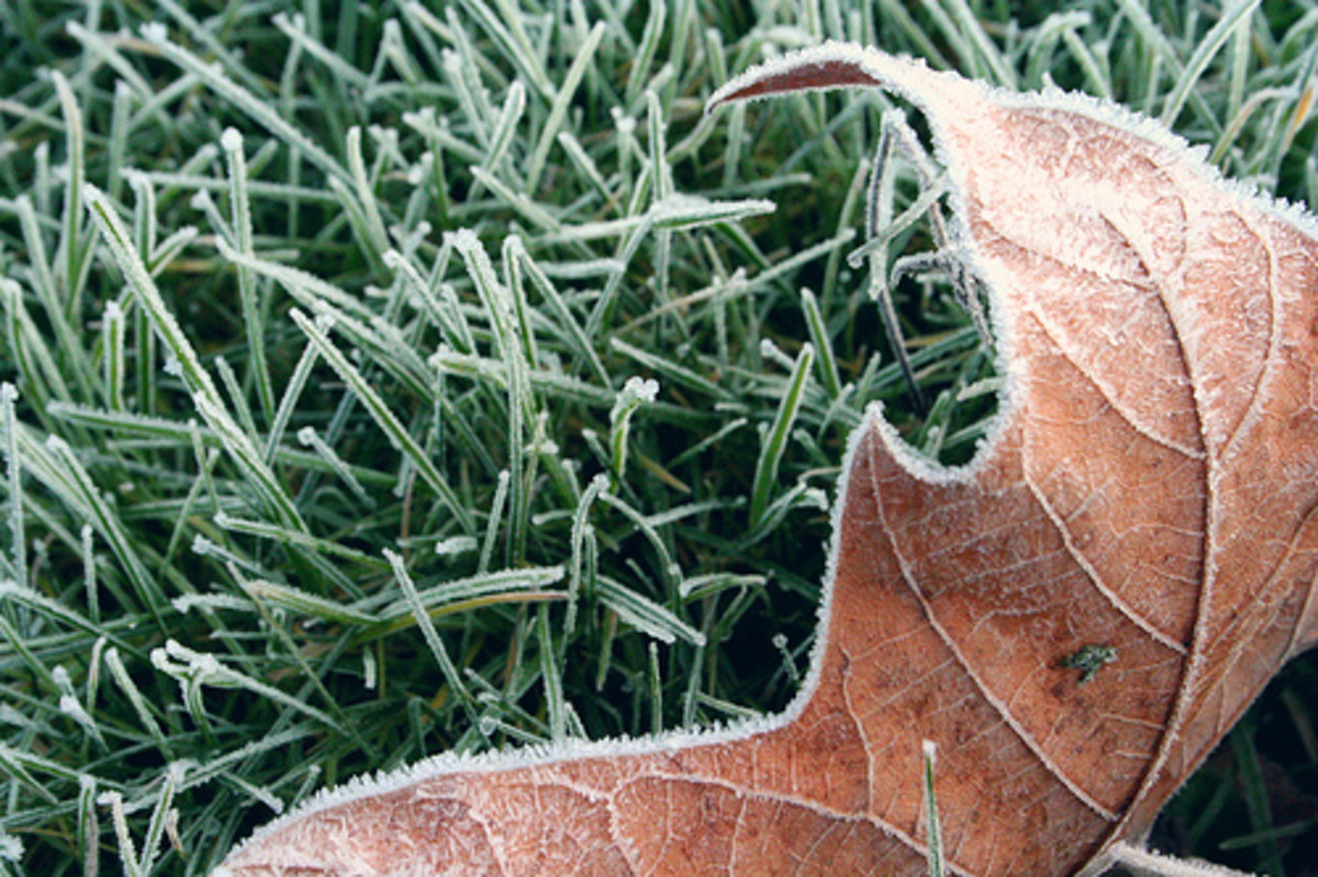 Keeping Your Lawn Green in the Winter - Winter Grasses