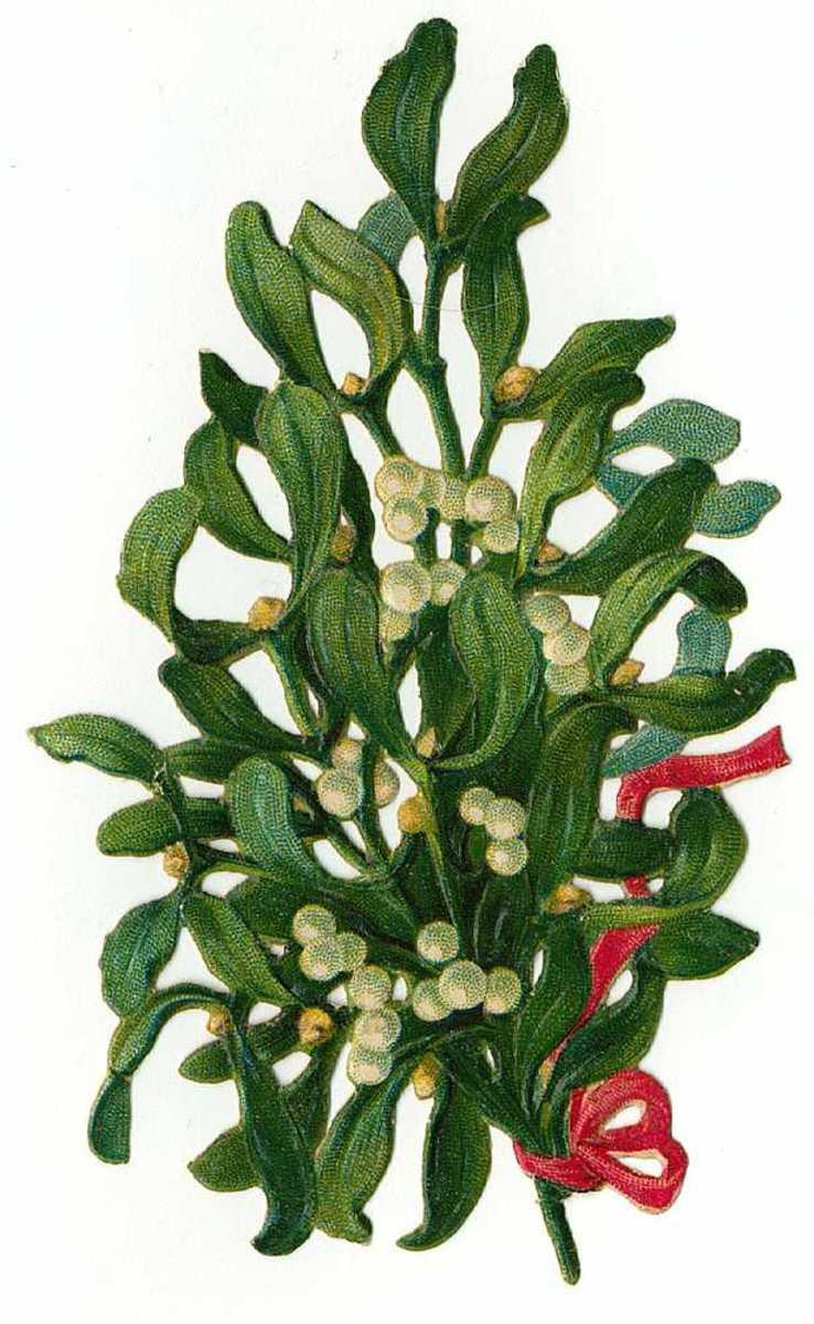 Vintage Christmas mistletoe clip art
