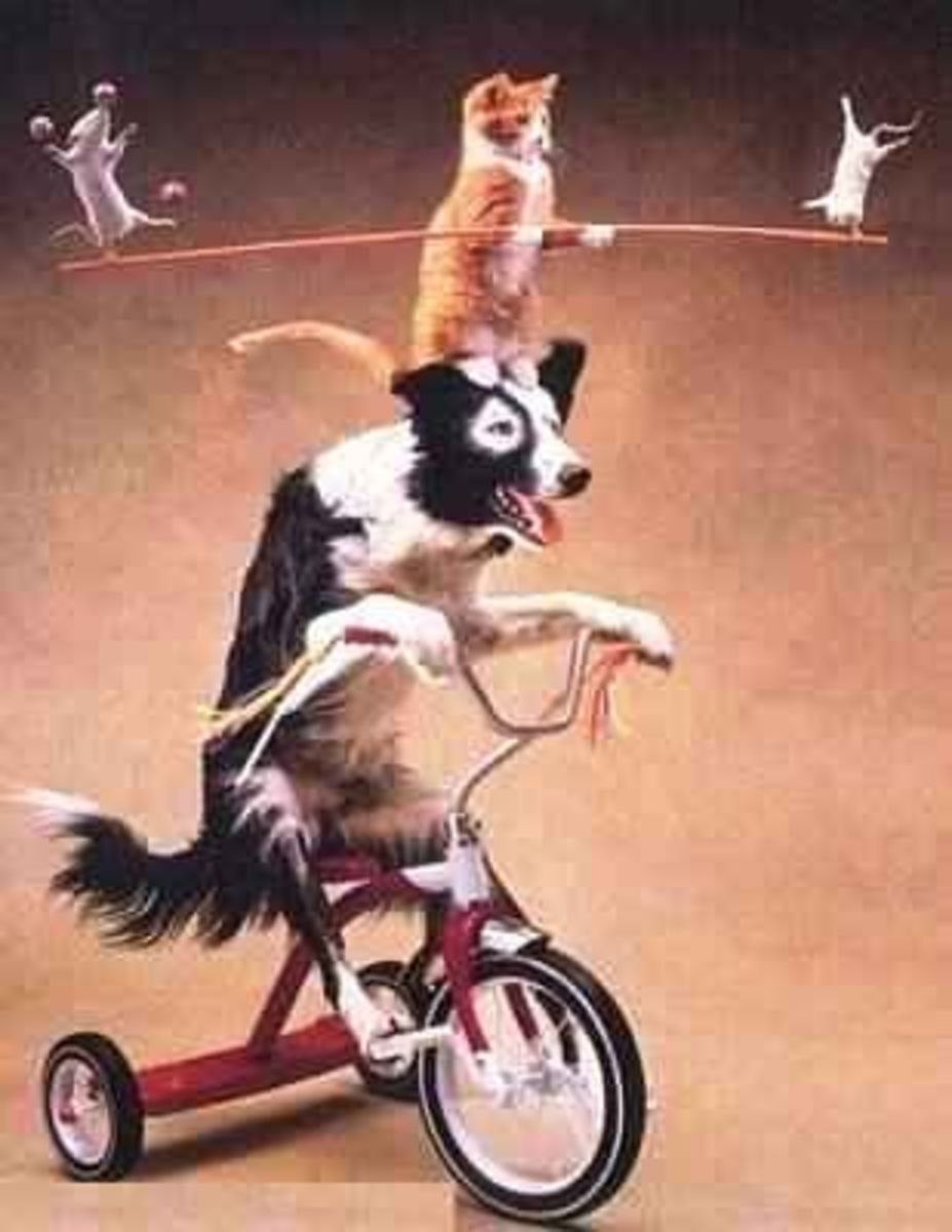 October 16th - Circus Dog