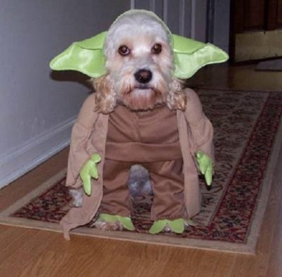 October 14th - Yoda