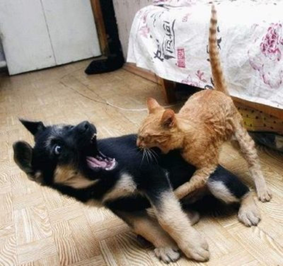 October 18th - Scaredy Cat