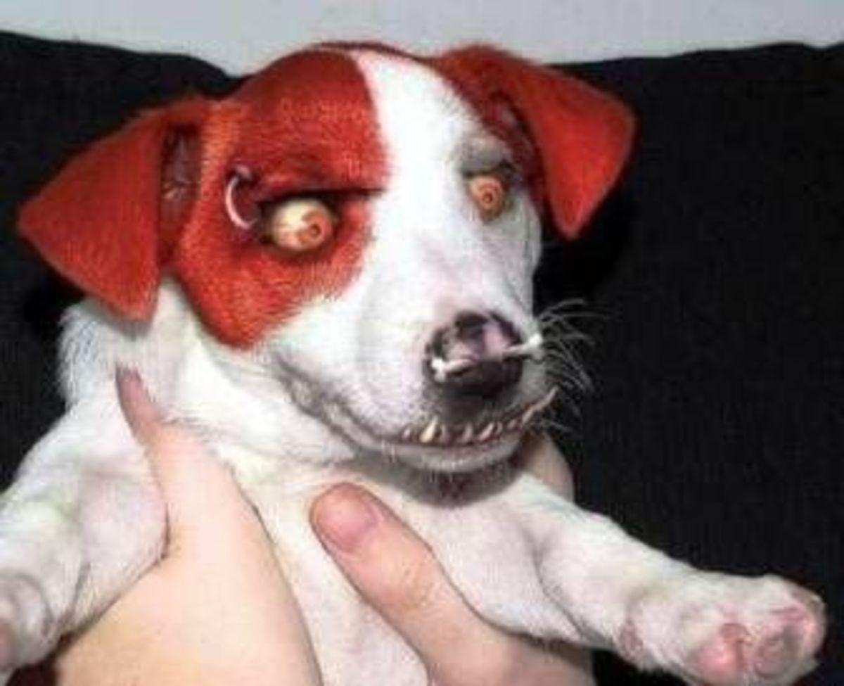 October 24th - Devil Dog