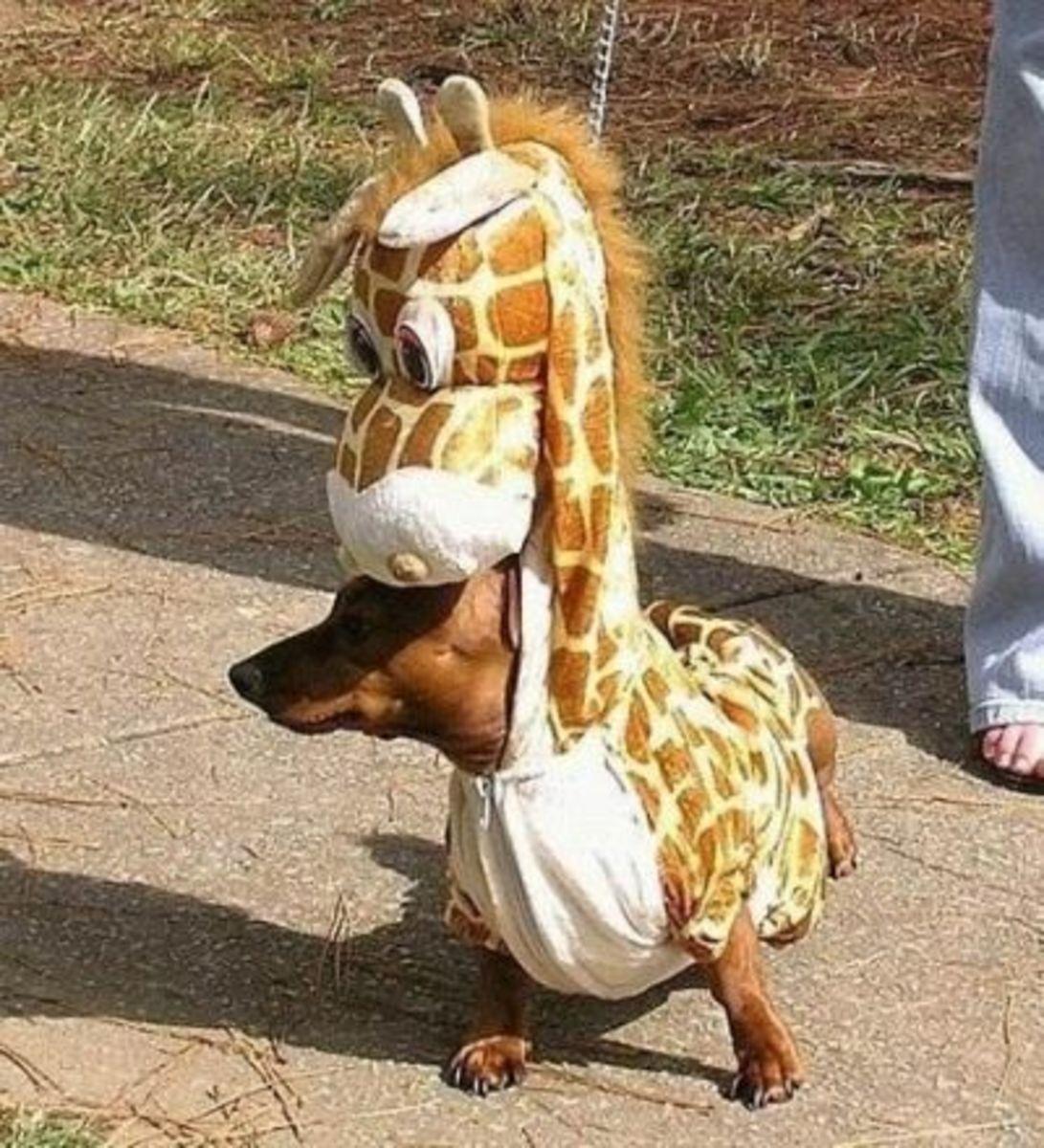 October 2nd - Giraffe