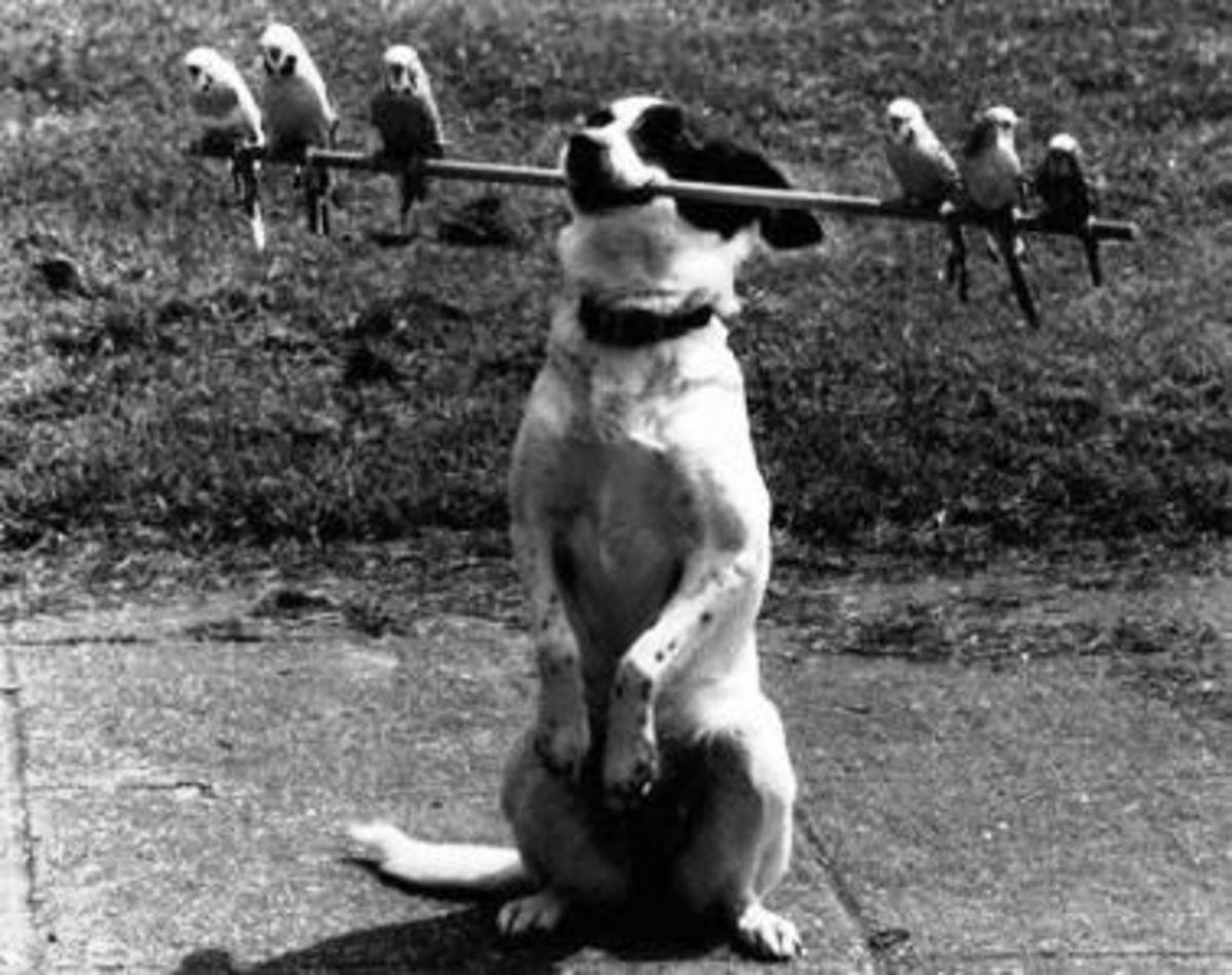 October 23rd - Bird Dog
