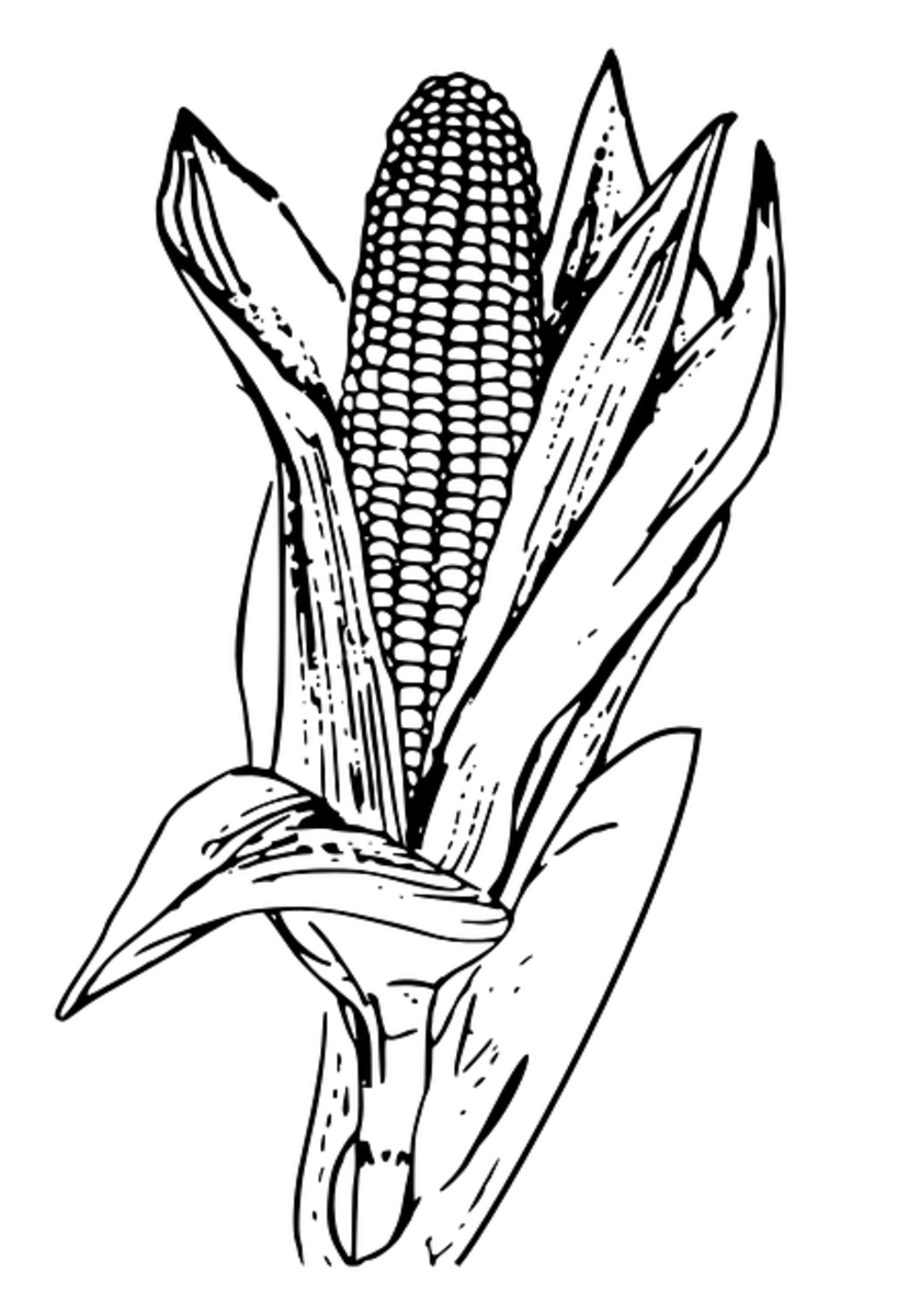 "In 1621, Massasoit and his band of native Americans in what is now Massachusetts grew 20 acres of corn and shared it with the English settlers. In the Southwest especially, corn is known as ""maize."""
