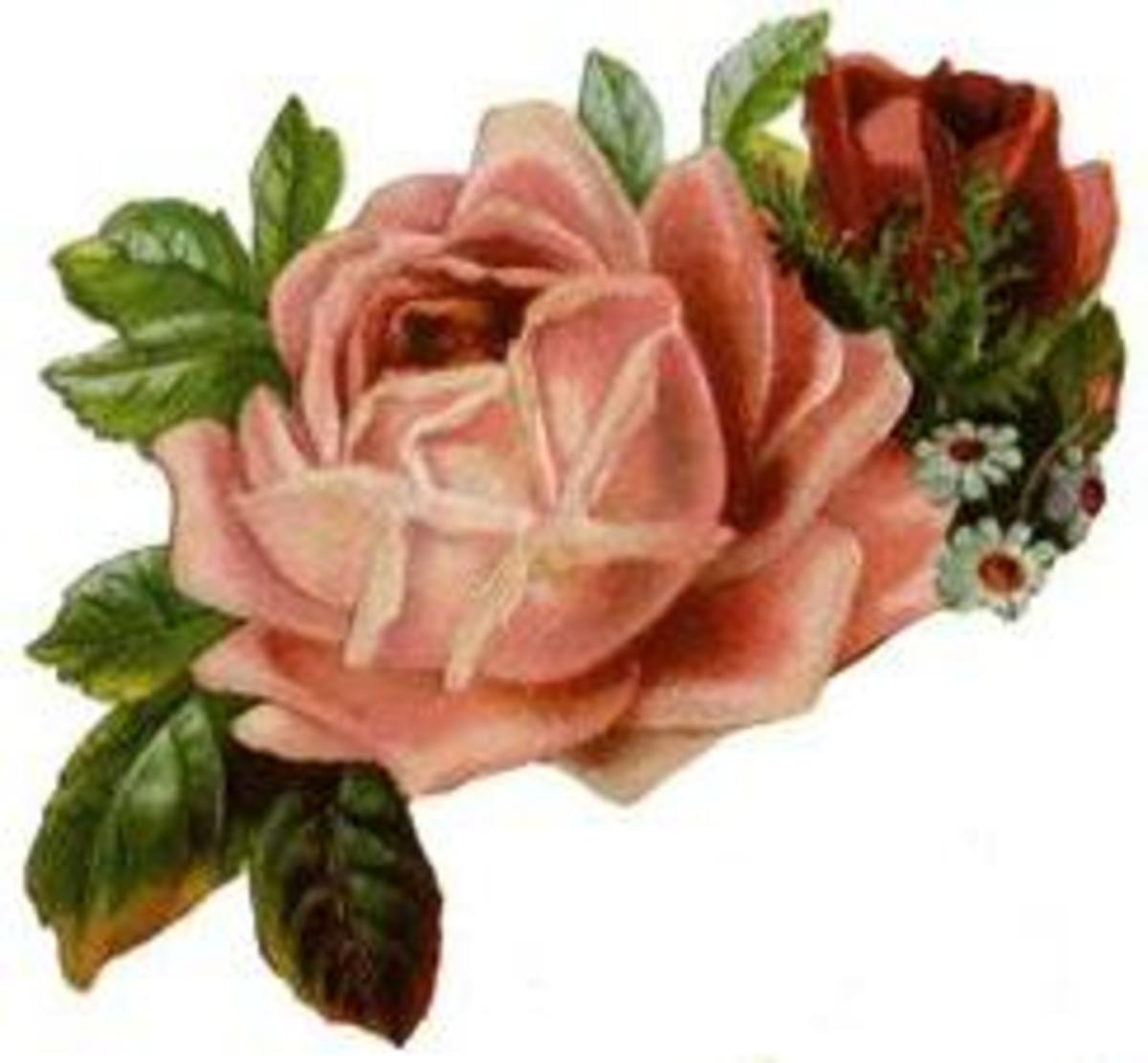 Vintage red and pink roses for Valentine's Day