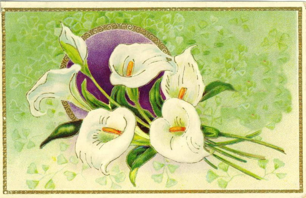 Vintage Easter greeting card: White Easter lilies on a green background