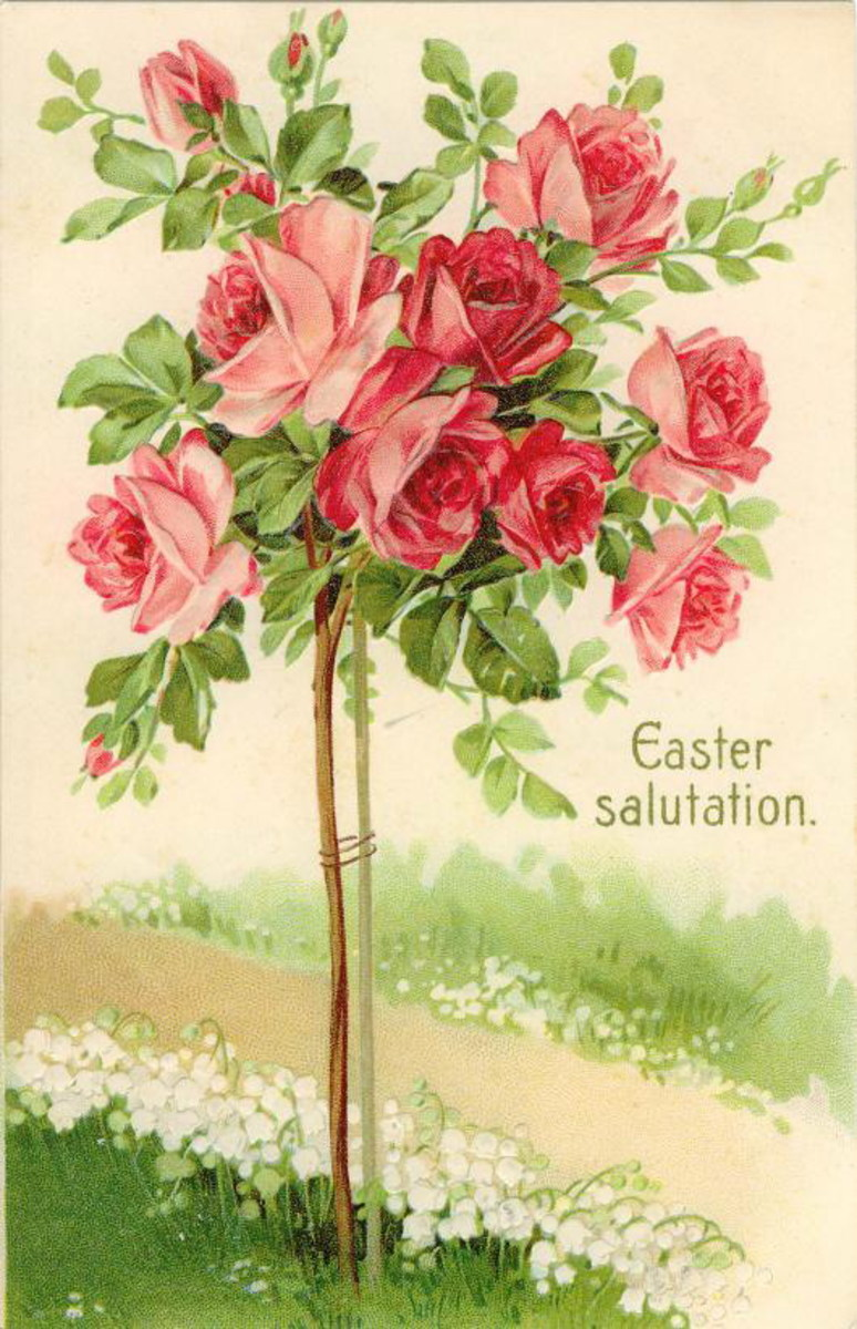 "Easter card: A pink rose bush ""Easter salutations"""