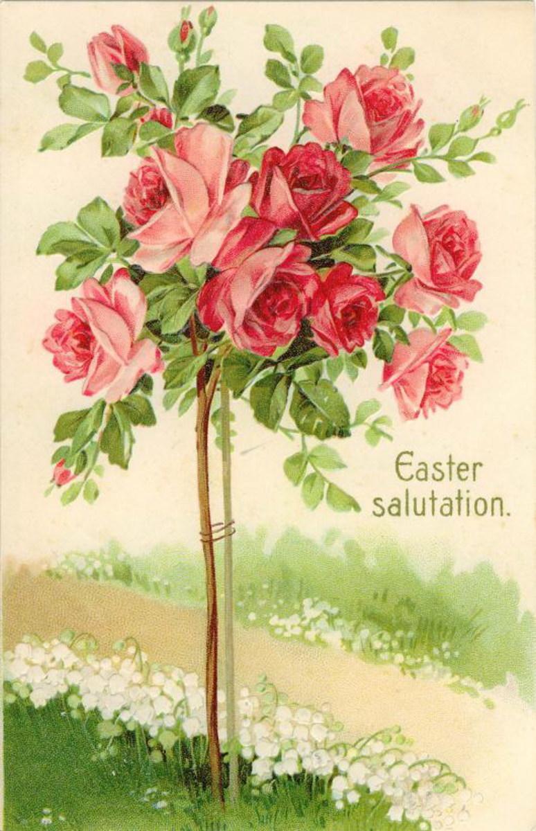 """Easter card: A pink rose bush """"Easter salutations"""""""