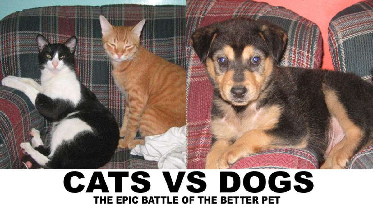 Cats vs Dogs- Which makes a better pet?
