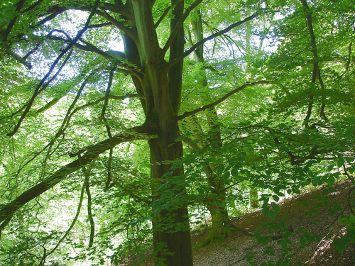 Forest of Dean Wildlife