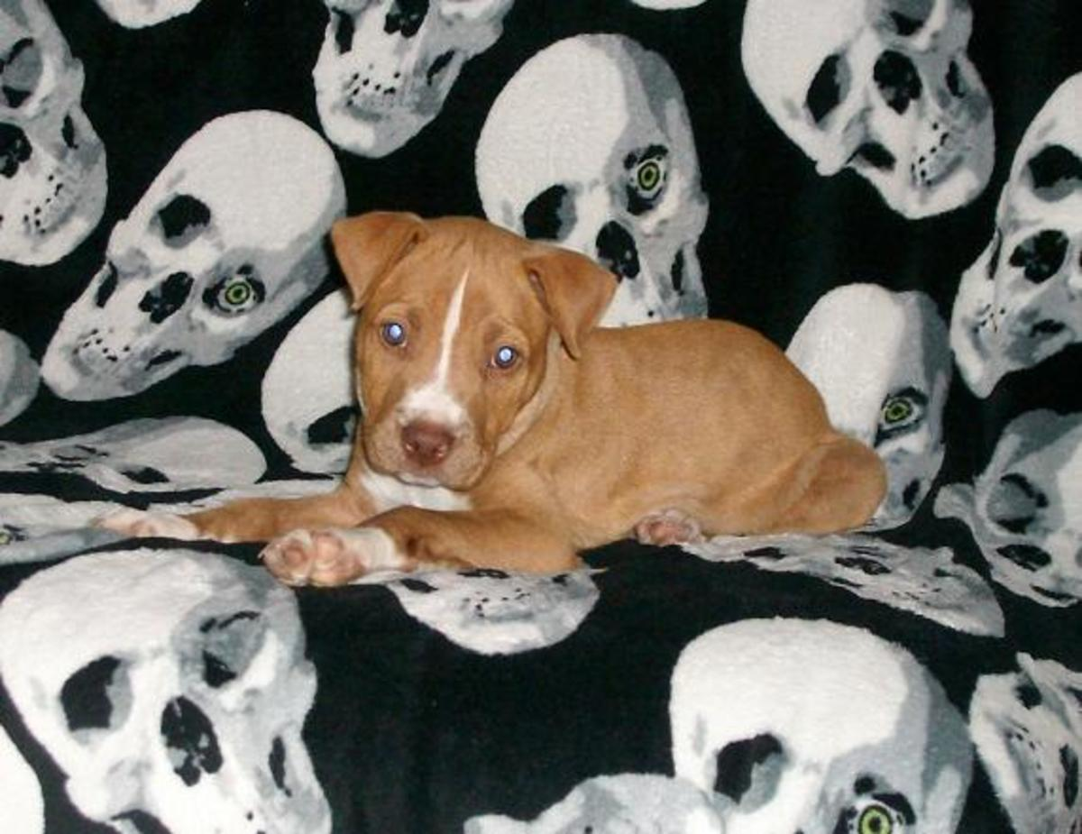 Bowser when we first got him at 8 weeks old.