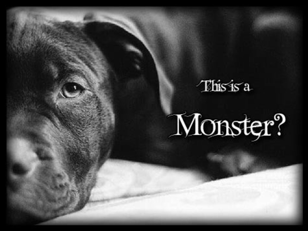 Who Are The Real Monsters, Pit Bulls Or Humans?